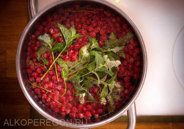 настойка из красной смородины с мятой