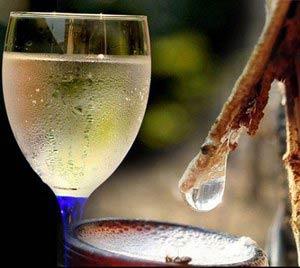 Рецепт вина из березового сока в домашних условиях